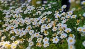 鳥取県米子市皆生温泉のソープランド かのん-KANON-の写メ日記 おはようございます乙葉です✩.*˚画像