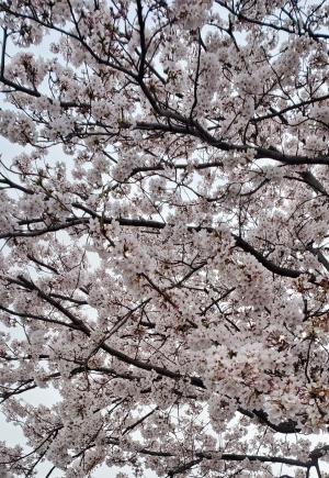 鳥取県米子市皆生温泉のソープランド かのん-KANON- 写メ日記 おはようございます乙葉です✩.*˚画像